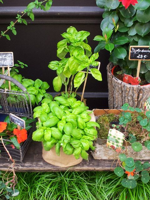 Basil, the greatest herb ever ? We think so