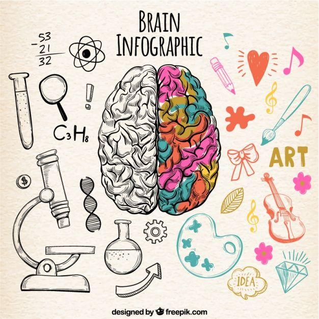 Infografía de cerebro humano fantástica con detalles de color Vector Gratis