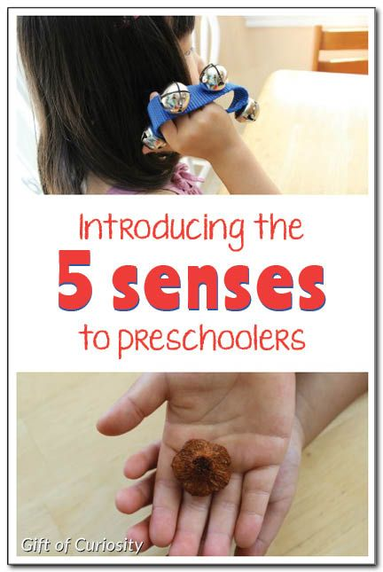 5 senses activities for preschoolers - ideas for introducing the five senses to preschoolers, including a free printable Exploring With My 5 Senses worksheet || Gift of Curiosity