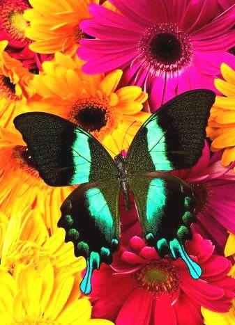 Figura de borboleta preta e verde com flores ao fundo