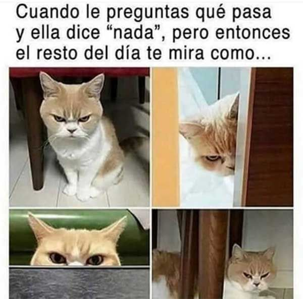 Memes Chistes Humor Funny Catmemes Invequa Memes En Espanol Chistes Cortos Y Humor Funny Cat Memes Animal Memes Funny Animal Pictures
