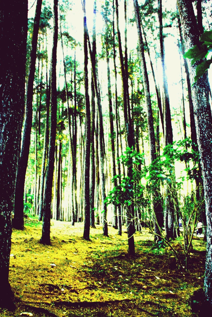 Pengen kesini...Juanda Forest Park, Bandung Indonesia