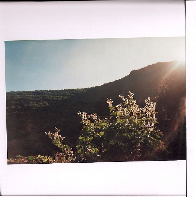 snake skin . jacket   .   panorama mountain view france. analogue photography, sun flares