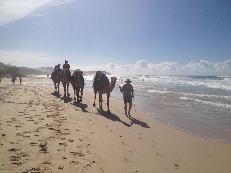 The things you see along the beach at Lighthouse Beach NSW Australia
