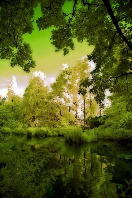 Inokashira Lake View | Flickr - Photo Sharing!