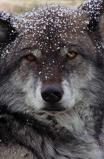 "wildlife-experience: "" Wow! """