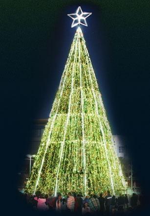 Christmas Tree, Hamilton, NZ