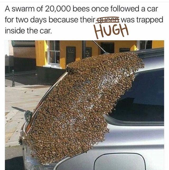 Has Hugh been here