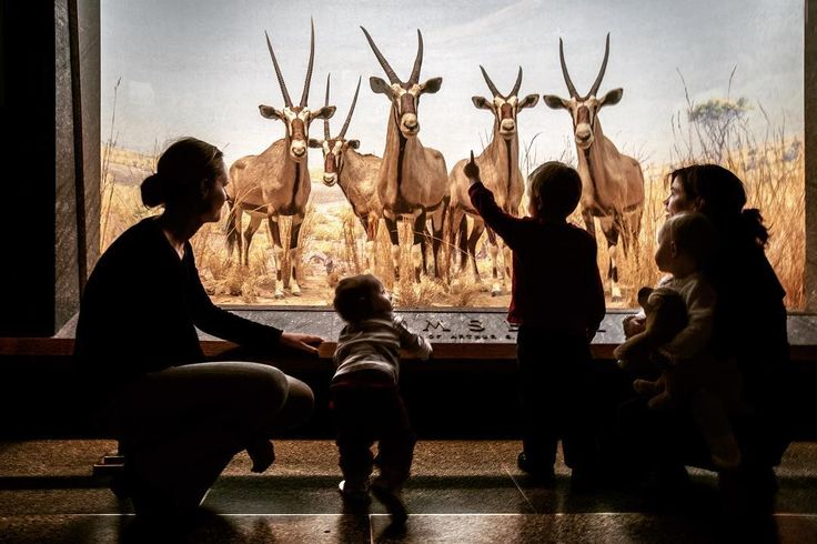 Teach your children well @americanmuseumofnaturalhistory #newyork #ny #usa #children #family #mothers