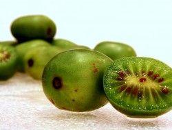 Graines de Actinidia arguta - Kiwi