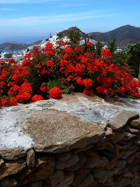 GREECE CHANNEL | Scenery, dry stonewall and red geranium. Chora, Ios island, Cyclades, Greece