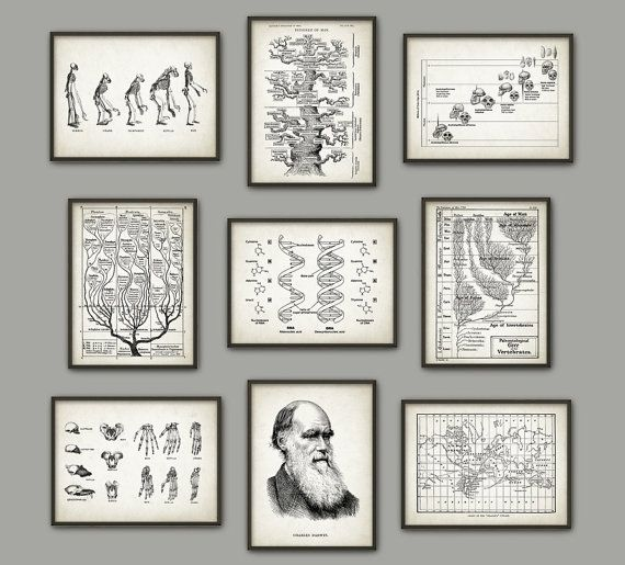 an analysis of the idea of evolution by charles darwin Essay on analysis of charles darwin's on the origin of species the idea of utilitarianism is introdroduced to britain with the help of charles darwin's the even though in the publication of 'on the origin of species' by charles darwin in 1859 human evolution was not specifically.