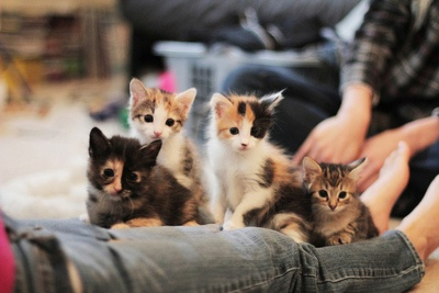 ,: Kitty Cat, The Faces, I Love Cat, Blog, Crazy Cat Lady, Dreams Coming True, Cute Kittens, Animal, Kittens Parties