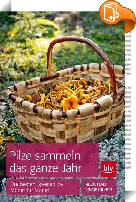 """Pilze sammeln das ganze Jahr    ::  Wer an die Pilzsuche denkt, hat häufig goldenes Herbstlaub und Spaziergänge durch bunt gefärbte Wälder im Kopf. Was nur Wenige wissen: Pilze lassen sich in der Natur fast überall und das ganze Jahr über finden. Die Experten Renate und Helmut Grünert zeigen in ihrem Buch """"Pilze sammeln das ganze Jahr"""" (BLV Buchverlag), wo man wann am besten suchen muss. Der Ratgeber ist das einzige Bestimmungsbuch, das die Pilze nach den Monaten ordnet, in denen sie a..."""
