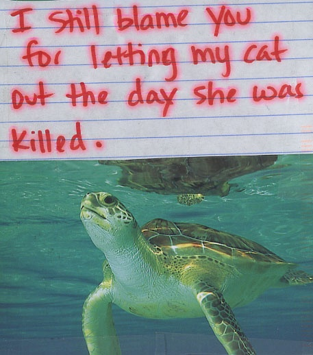 Secret from PostSecret.com - I feel like this about the budgie my mam left outside that was eaten by a cat :(