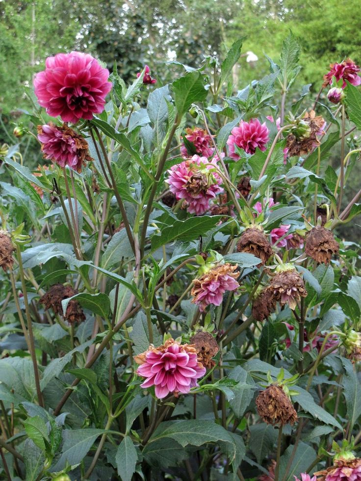 En el jardin: Flores anuales