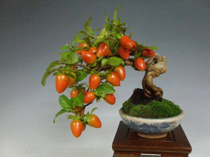 17 mejores ideas sobre rboles frutales enanos en for Arboles enanos para jardin