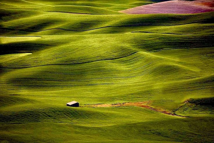 Palouse Hills -  Washington State, USA