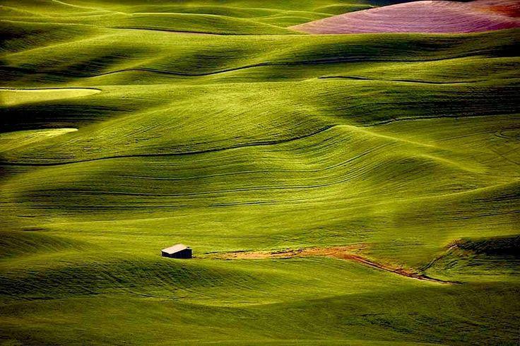 Palouse Hills -  Washington State, USA