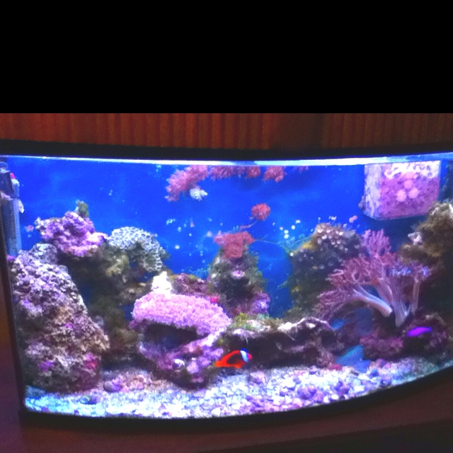 43 best salt water fish tanks images on pinterest for Best water for fish tank