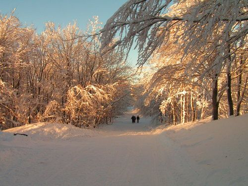 Enjoy the snow and try cross-country skiing