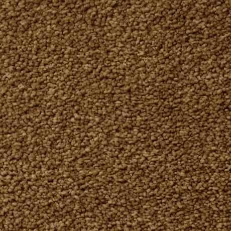 EMBRACE BRACKEN Texture TruSoft® Carpet - STAINMASTER®