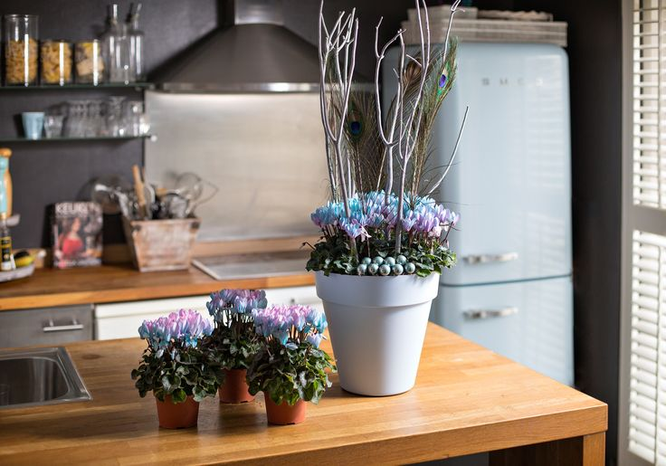 color in the kitchen with Make-upz cyclamen