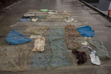 Syk hval hadde 30 plastposer i magen - Aftenposten