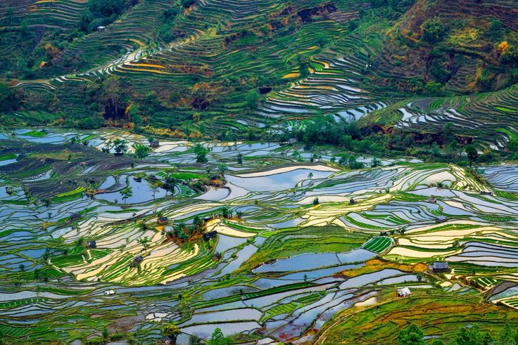 <p>An aerial view of the rice terrace in Yuanyang, Yunnan Province, China. (Enrico Barletta/Caters News) </p>