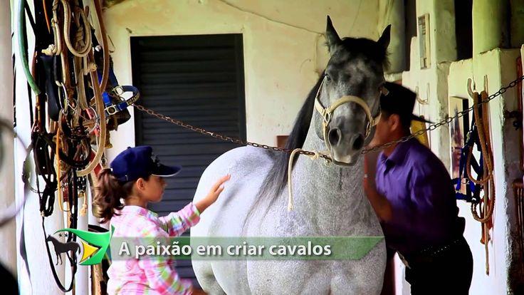 TVQM 105 - Prévia do Nacional e expectativa / Paixão em criar cavalos