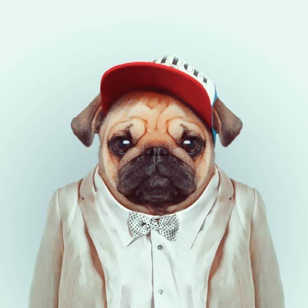 Zoo Portraits – Les animaux habillés de Yago Partal