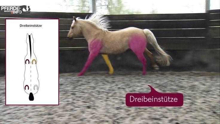 Galopp, Trab und Schritt: Die Grundgangarten beim Pferd