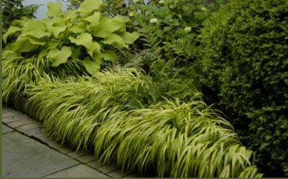 Best 25 sidewalk edging ideas on pinterest flower bed for Ornamental grass edging