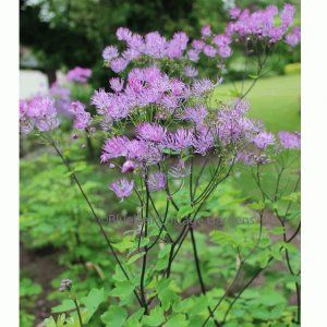 Meadow rue black stockings with dresses