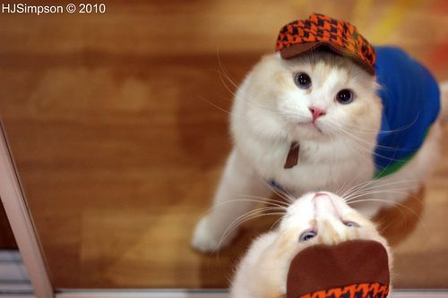 Animals in Costume » A Cute A Day