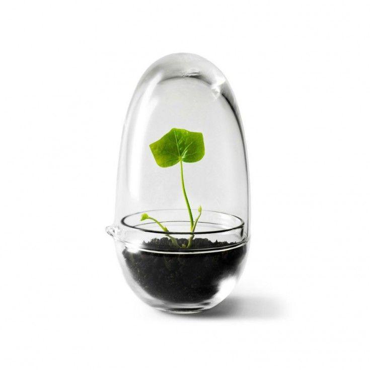 Växthus Grow