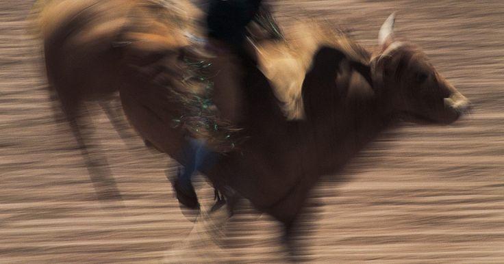 Salario de jinete de toros. Un profesional montador de toros es un deporte con un alto riesgo, junto con grandes días de paga para los jinetes exitosos. Mientras Professional Bull Riders, Inc. se jacta de que montar toros puede ser una carrera lucrativa que puede ganarle sus atletas millones de dólares, esto no es necesariamente el caso, en el circuito de rodeo, sólo ...