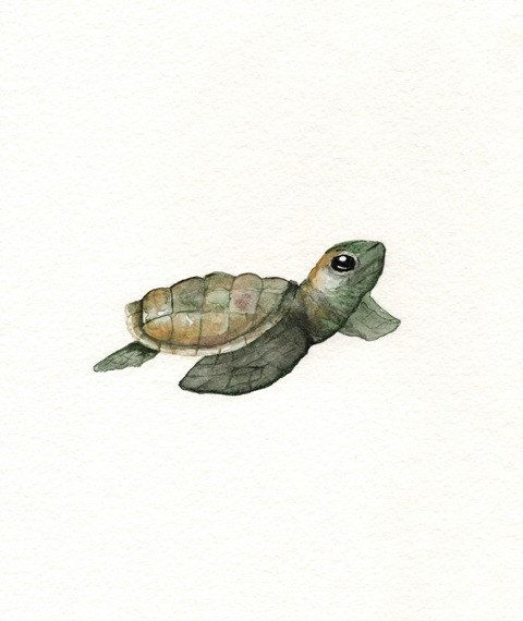 ACEO  Baby Loggerhead Turtle / watercolor print / ocean life  / beach cottage decor on Etsy, $5.00