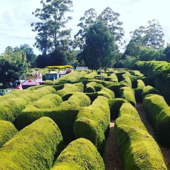 Get lost in an IRL hedge maze.