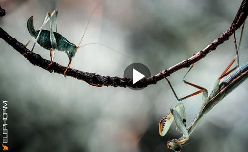 Formation Photo : la macrophotographie en vidéo avec Cyril Verron