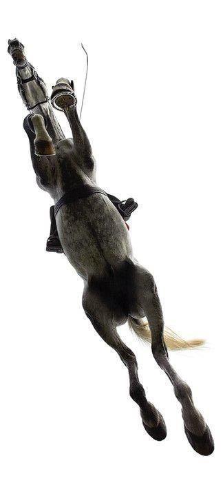 Equestrian: Jumping grey Hunter jumper... #mike1242