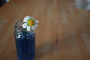 Cómo Hacer Flores de Colores | experCiencia