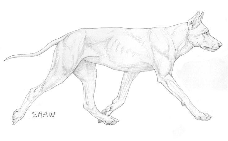 Shawlein Fine Art & Purebred German Shepherd Dogs