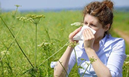 Top 8 Herbal Remedies For Seasonal Allergies