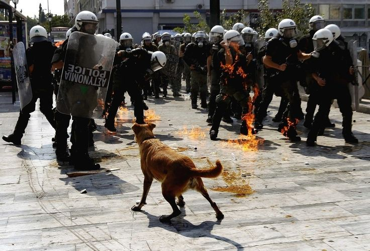 Loukanikos, the riot dog, watches as riot policemen try to avoid an exploding petrol bomb thrown by protesters during a demonstration in Athens, Greece.