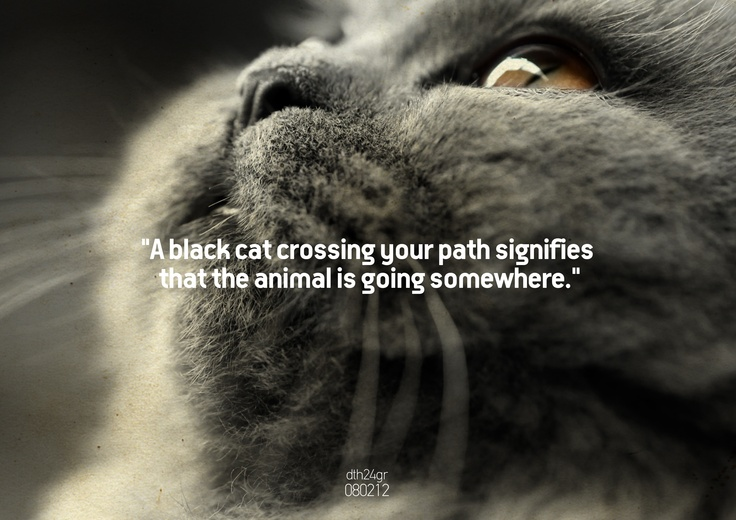 """A black cat crossing your path signifies that the animal is going somewhere."" #dth24gr    Creative Graphic Designer: Δημήτρης Θεοδωρόπουλος"