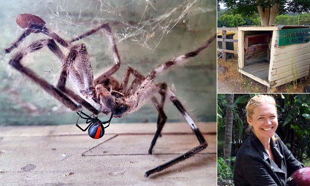 Huntsman and redback spider battle inside a letterbox | Daily Mail Online