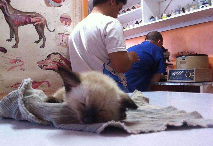 Les 25 Meilleures Id Es De La Cat Gorie Urine De Chien Sur Pinterest Produit Pour Enlever L