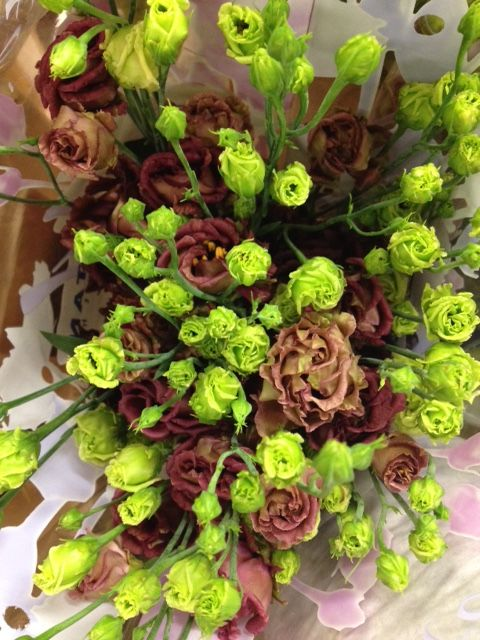 Lisianthus 'Rosanne Deep Brown'...Sold in bunches of 10 stems from the Flowermonger the wholesale floral home delivery service.