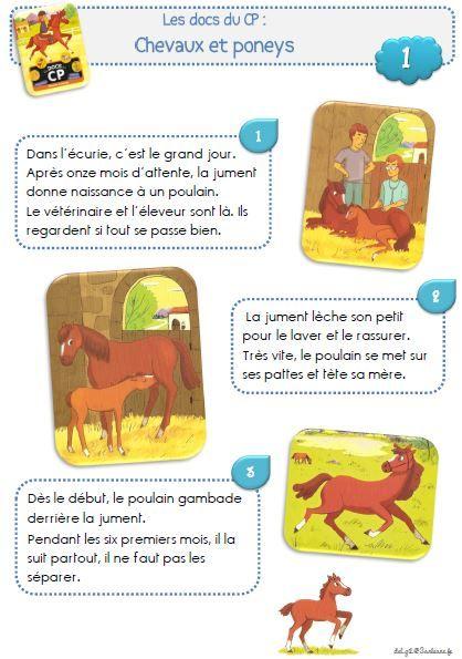 Les docs du CP : Chevaux et poneys